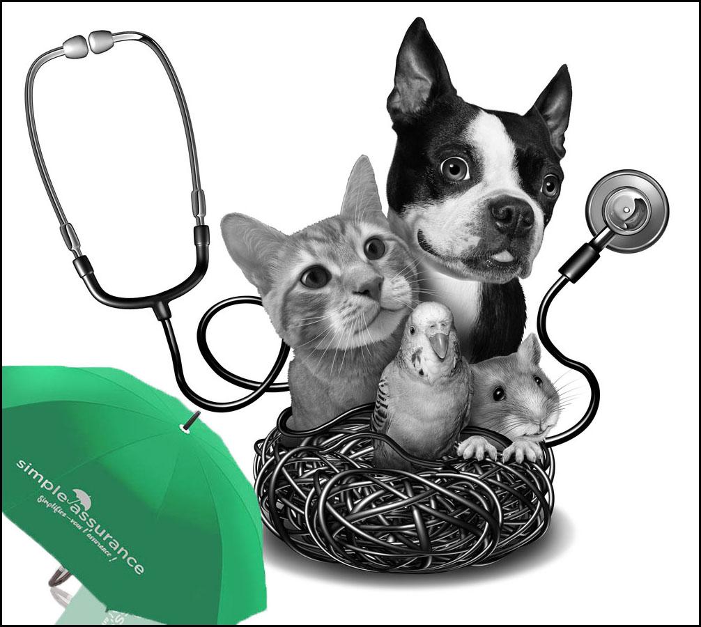 simple-assurance, simplifiez vous l'assurance Devis assurance animaux